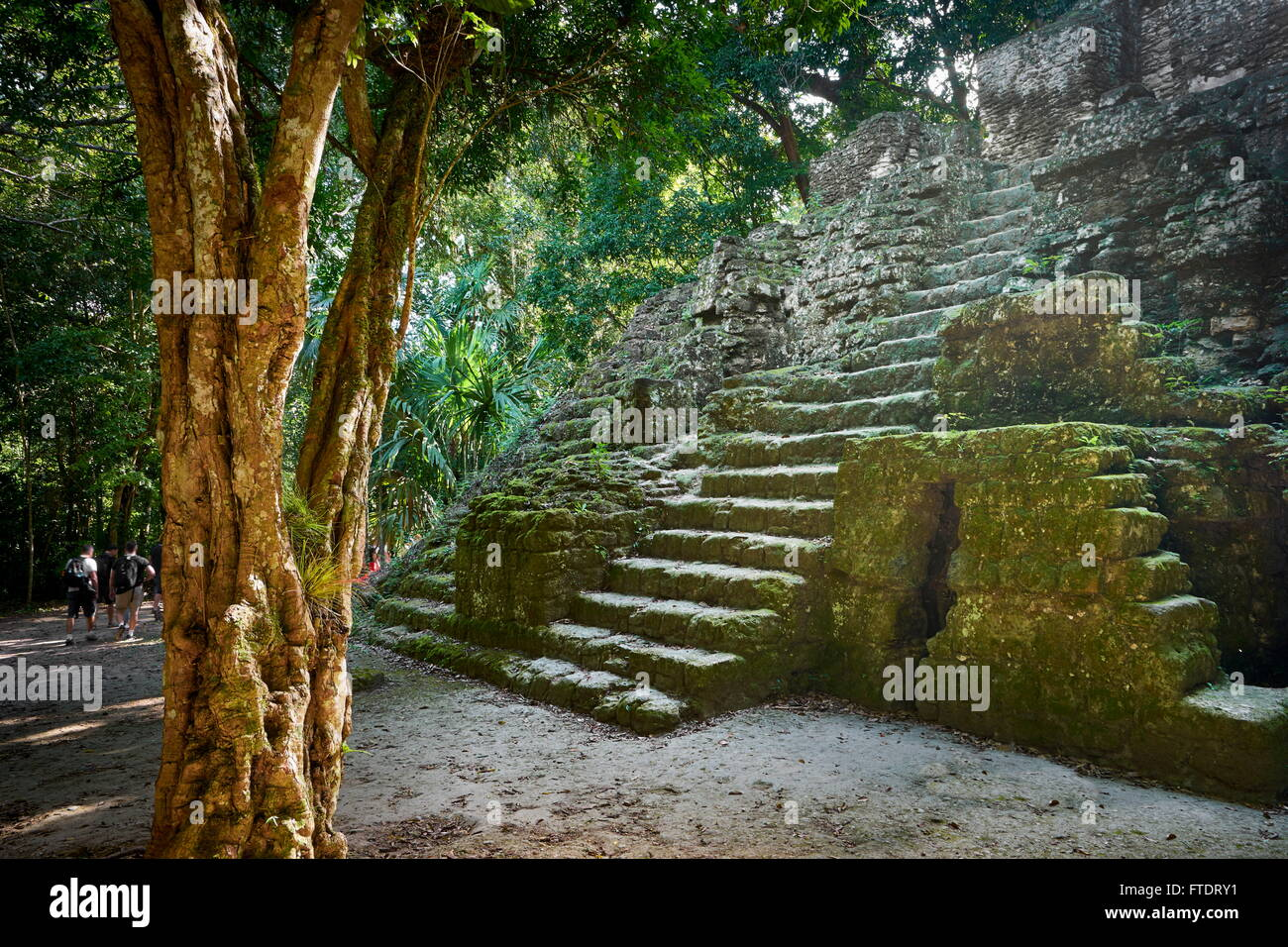 Ancient Maya Ruins, Tikal National Park, Yucatan, Guatemala UNESCO - Stock Image