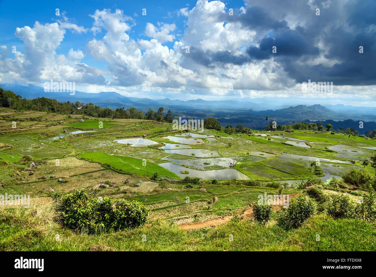 Green rice field terraces in Tana Toraja. South Sulawesi, Indonesia - Stock Image