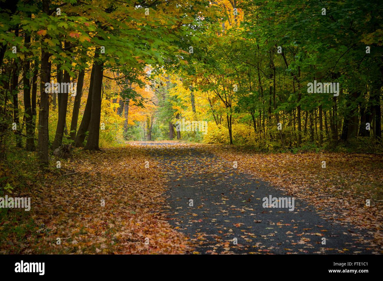 Rural Road With Autumn Trees Fall Foliage, Pennsylvania USA - Stock Image
