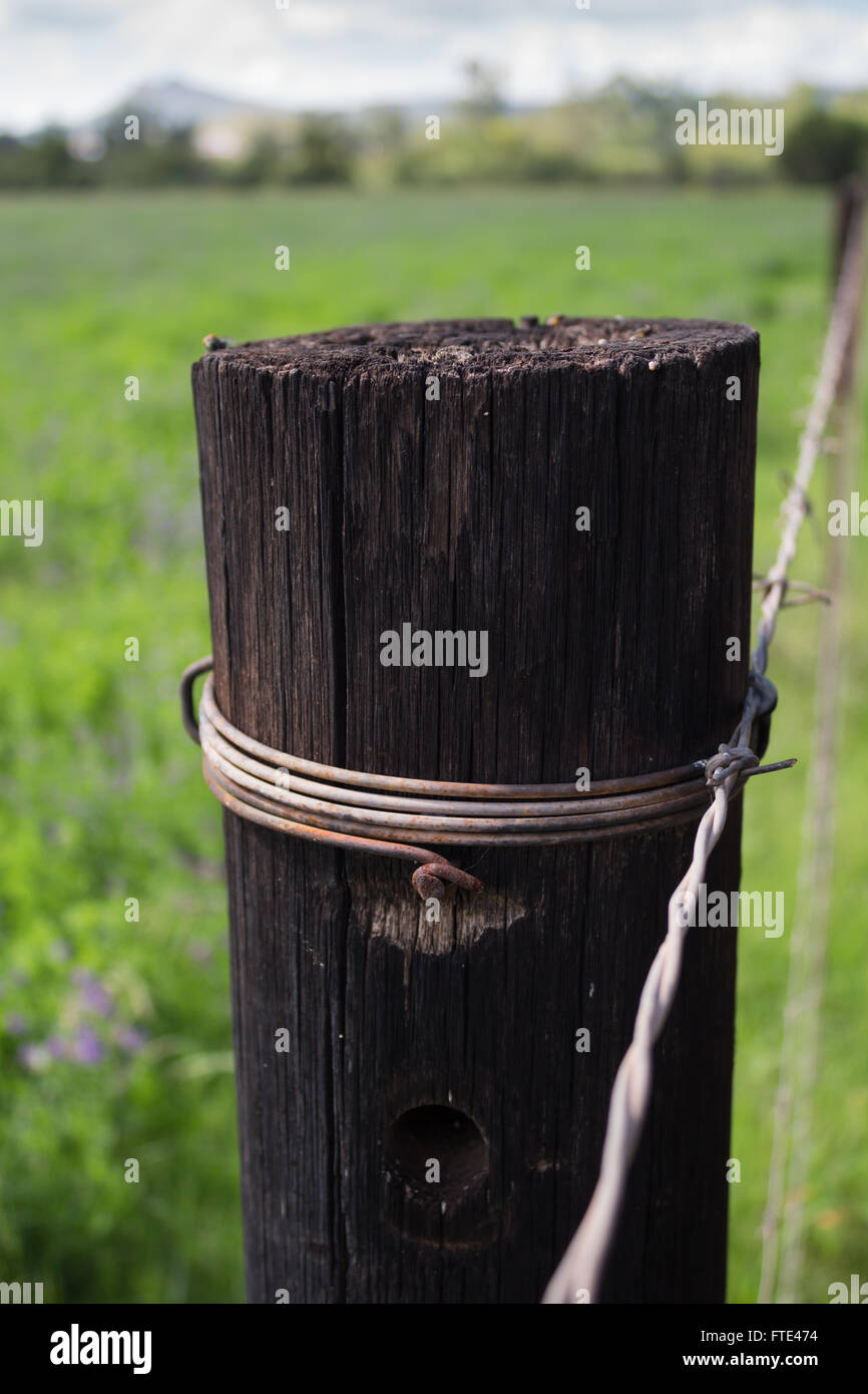 Close up of single wooden fence post next two summer field - Stock Image
