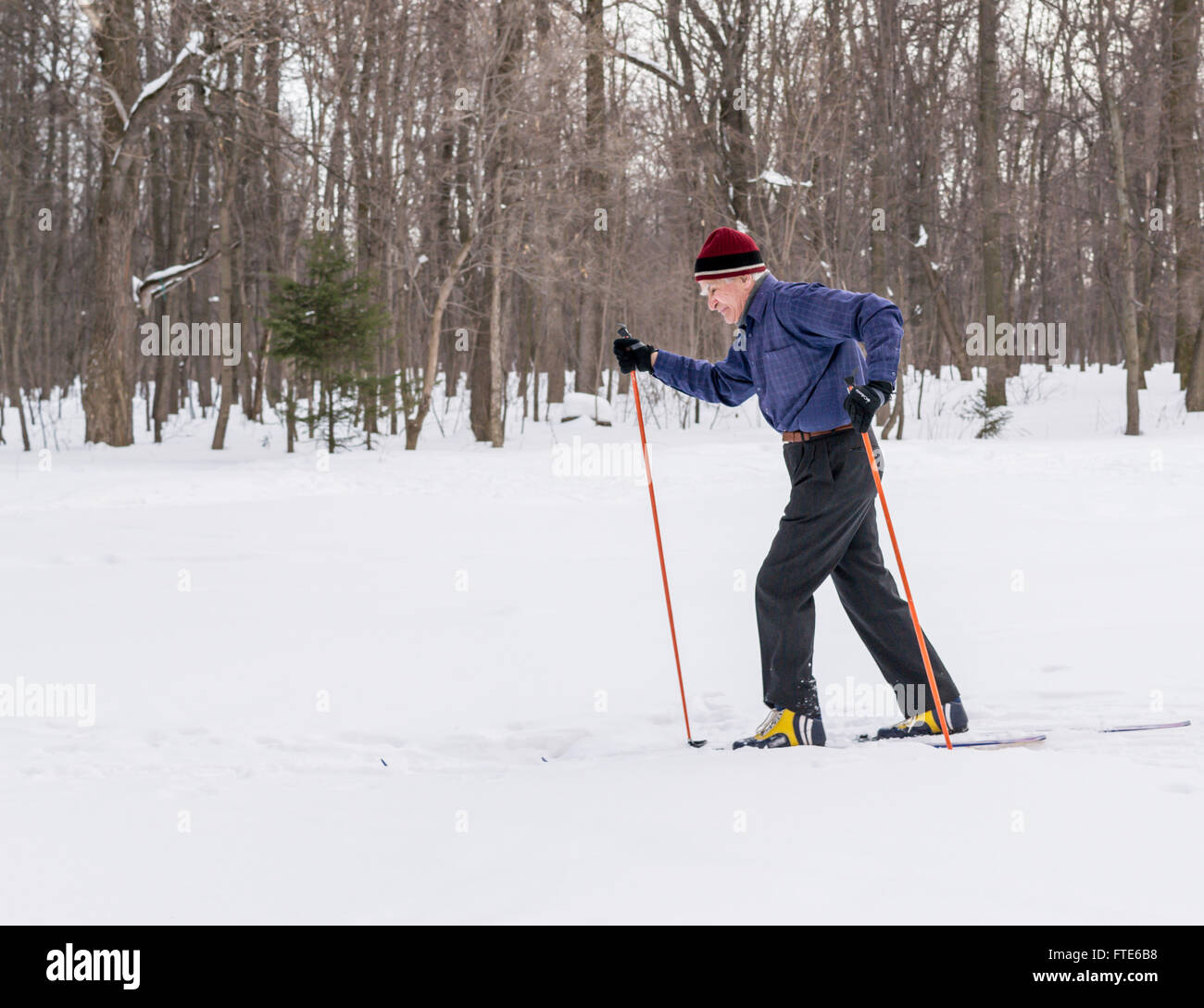 UFA - RUSSIA 22ND FEBRUARY 2016 - An old man exercises to improve his health by cross country skiing in a public - Stock Image
