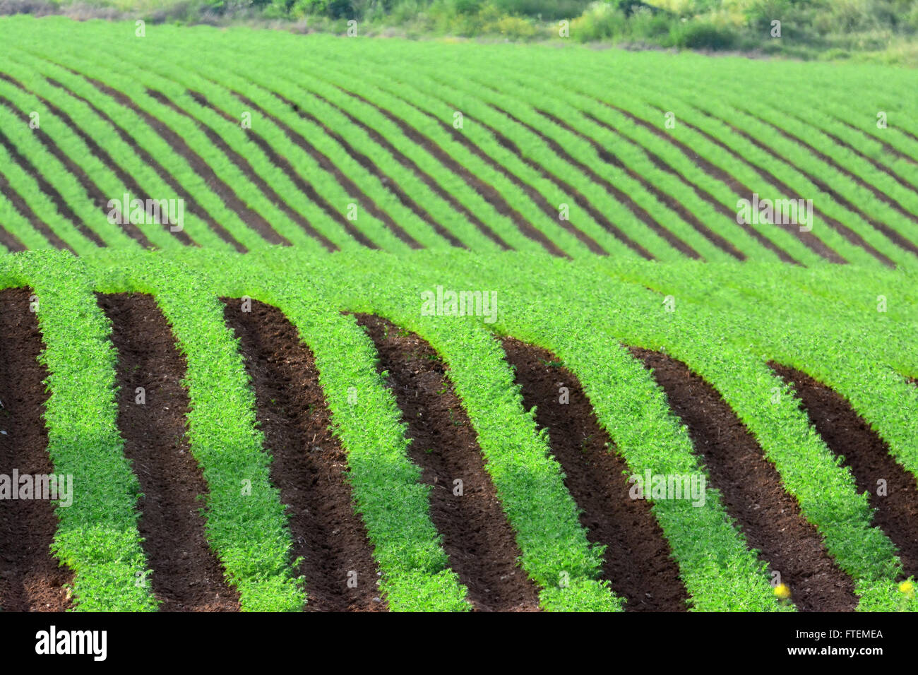 Hilly green field - Stock Image