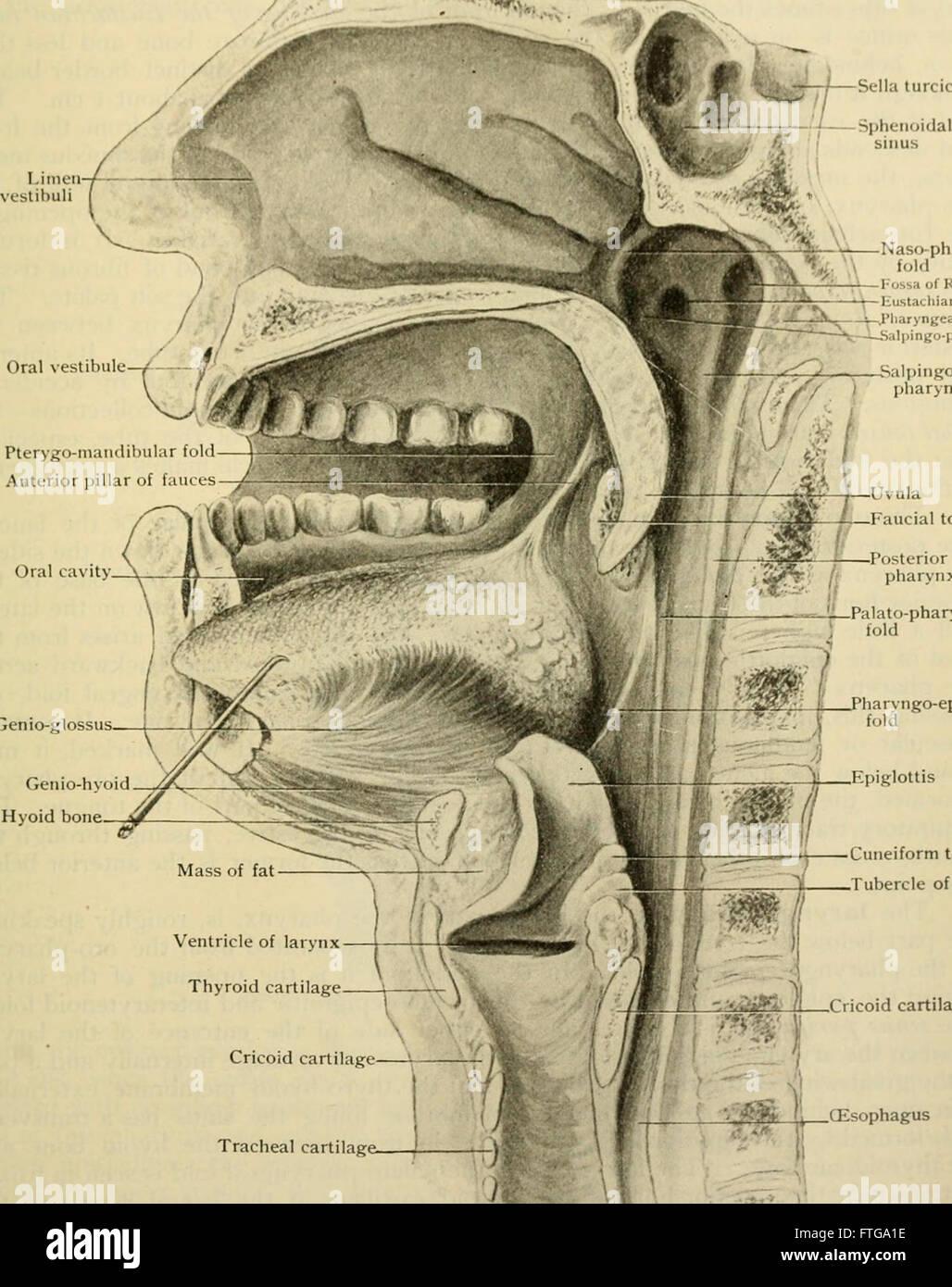 Human Anatomy Including Structure Development Stock Photos Human