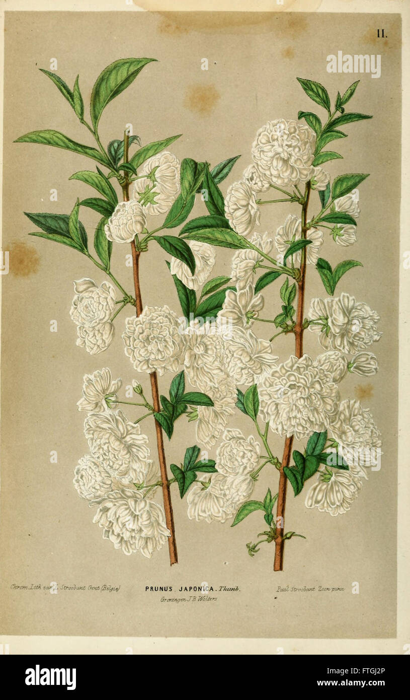 Neerland's Plantentuin (Pl. II) - Stock Image