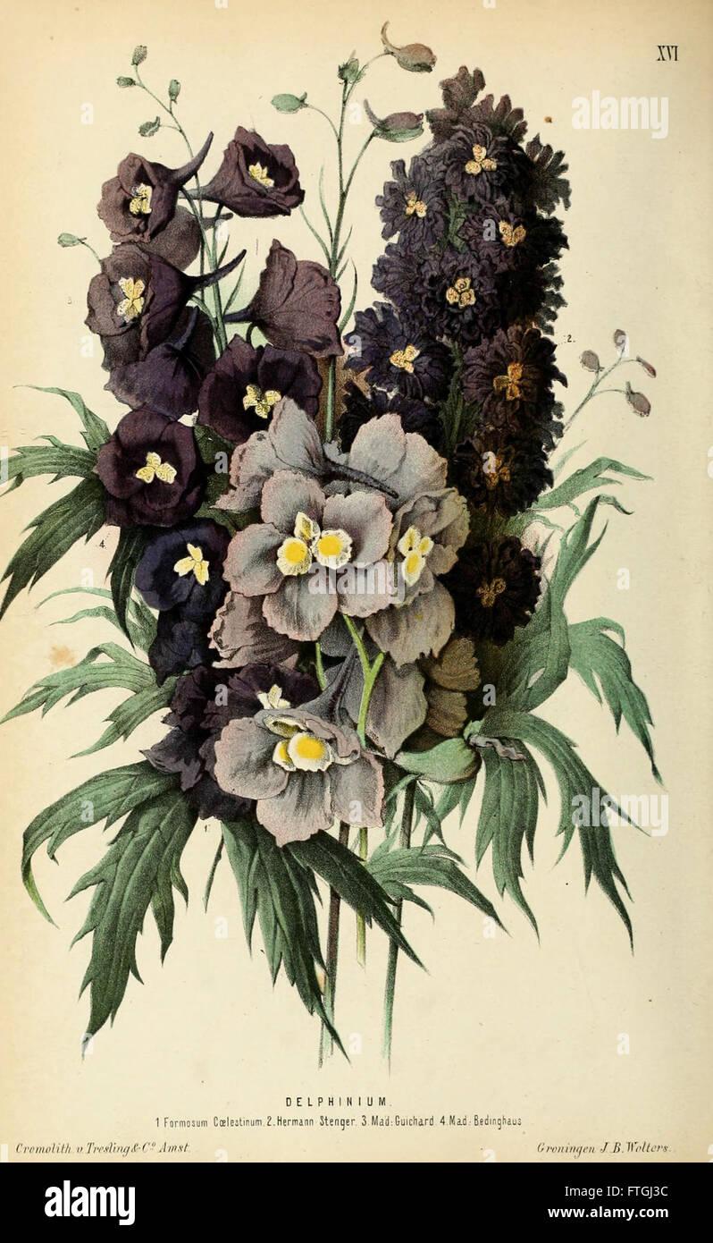 Neerland's Plantentuin (Pl. XVI) - Stock Image