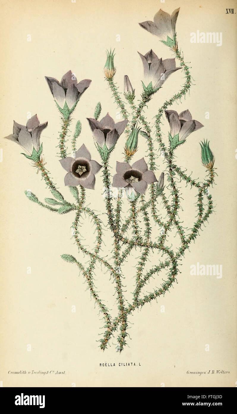 Neerland's Plantentuin (Pl. XVII) - Stock Image