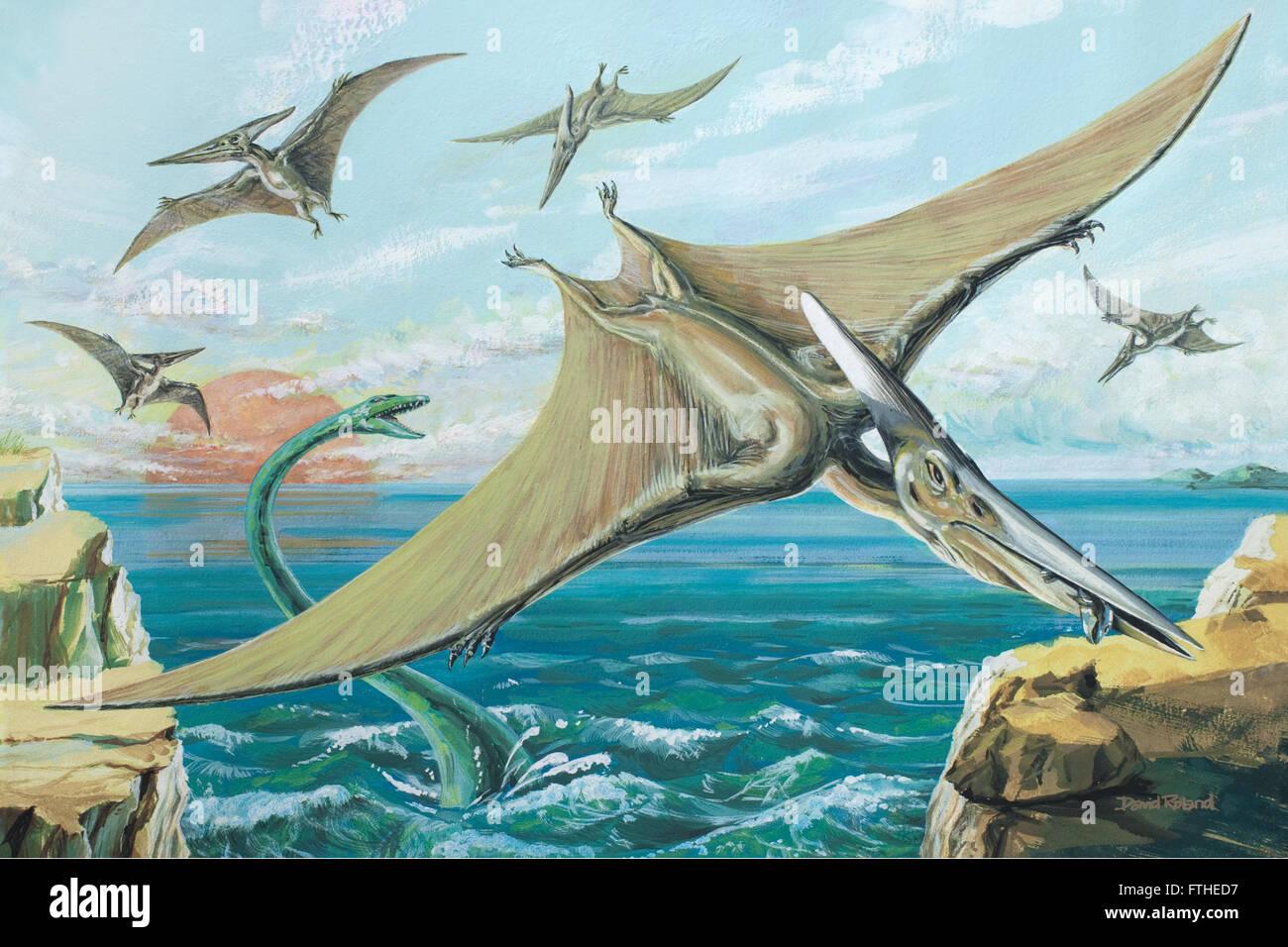 Pteranodon - Stock Image