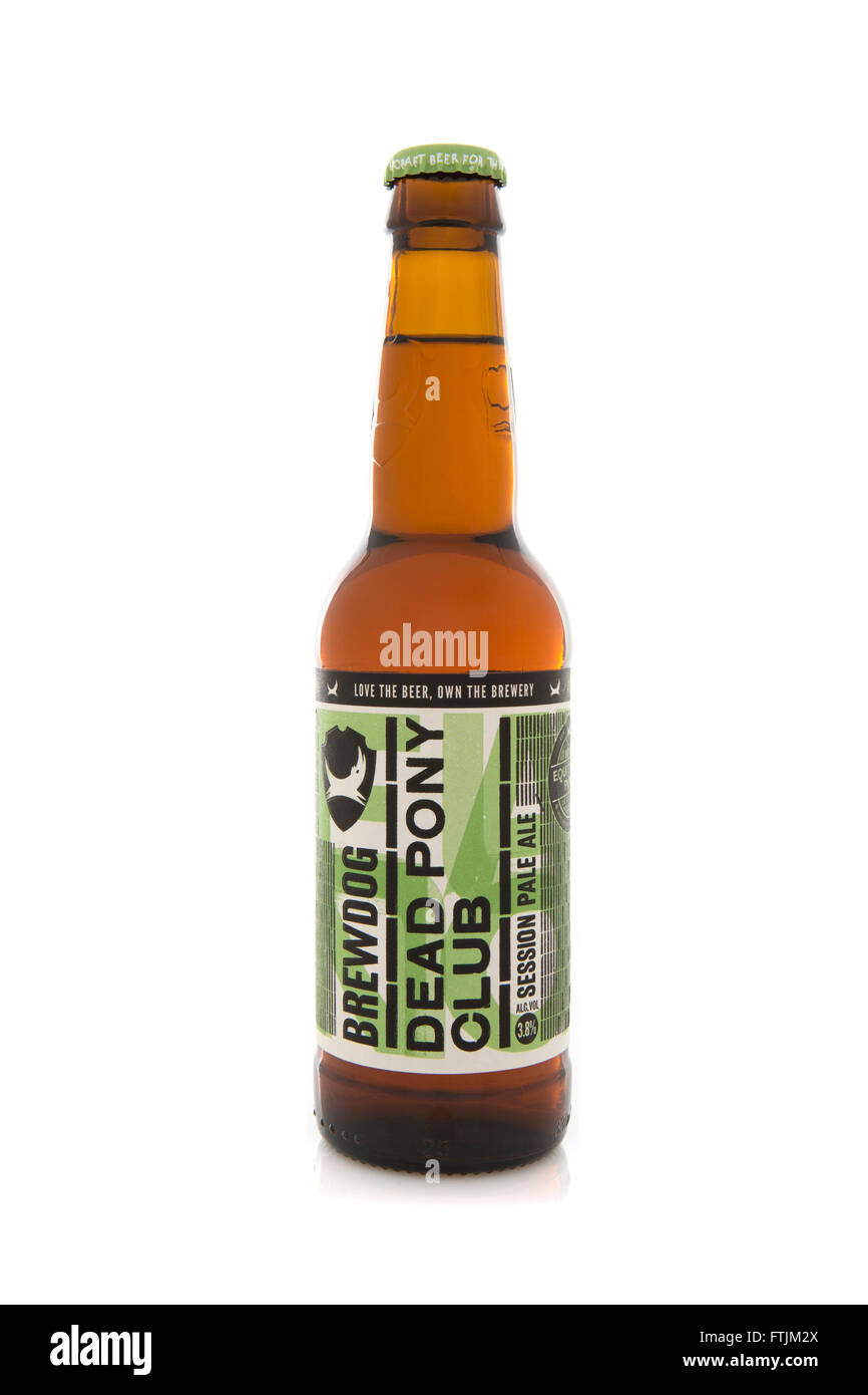 A Bottle of Dead Pony Club pale ale, from the Brewdog brewery - Stock Image