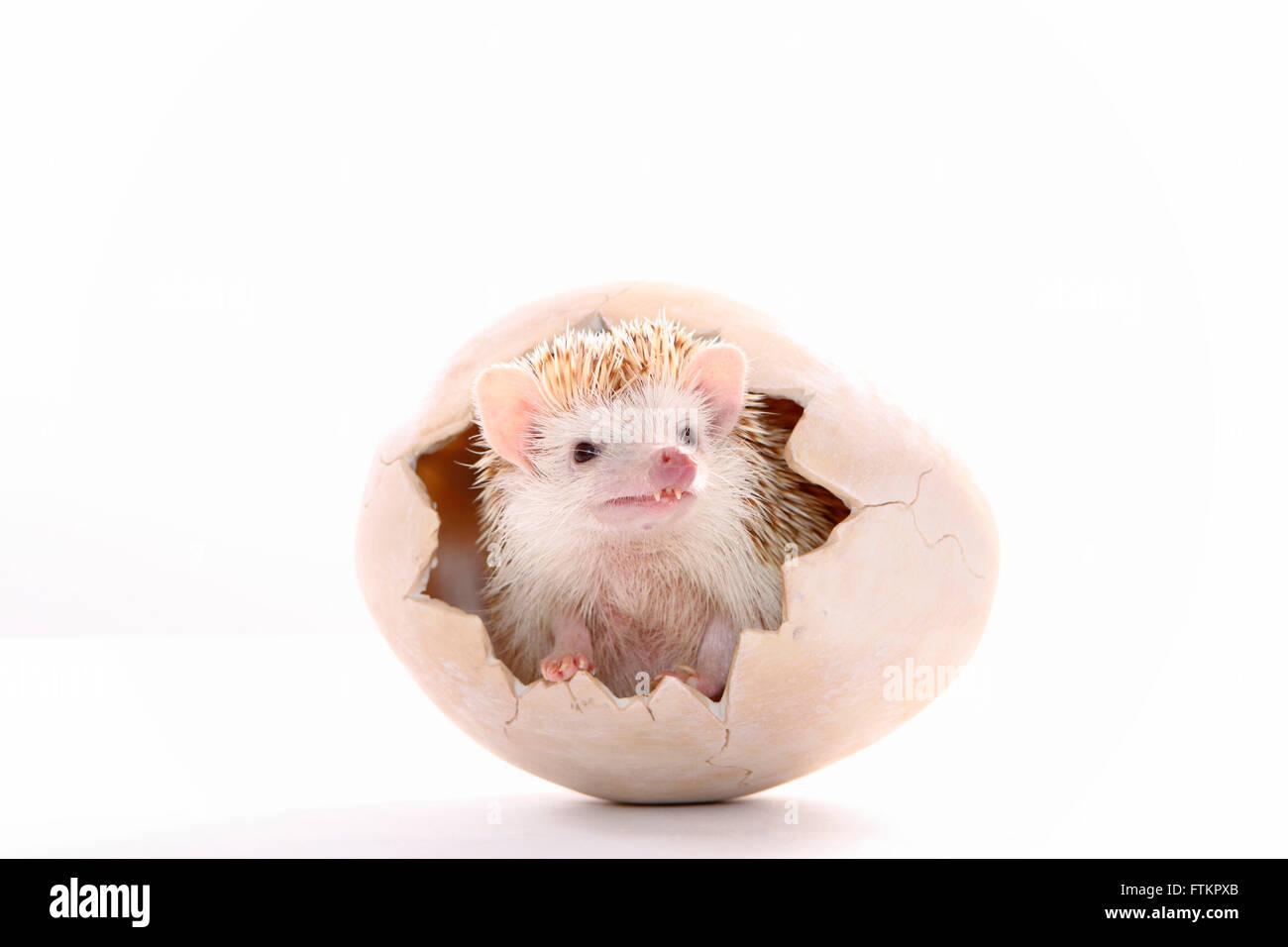 Hedgehog Like Stock Photos & Hedgehog Like Stock Images - Alamy