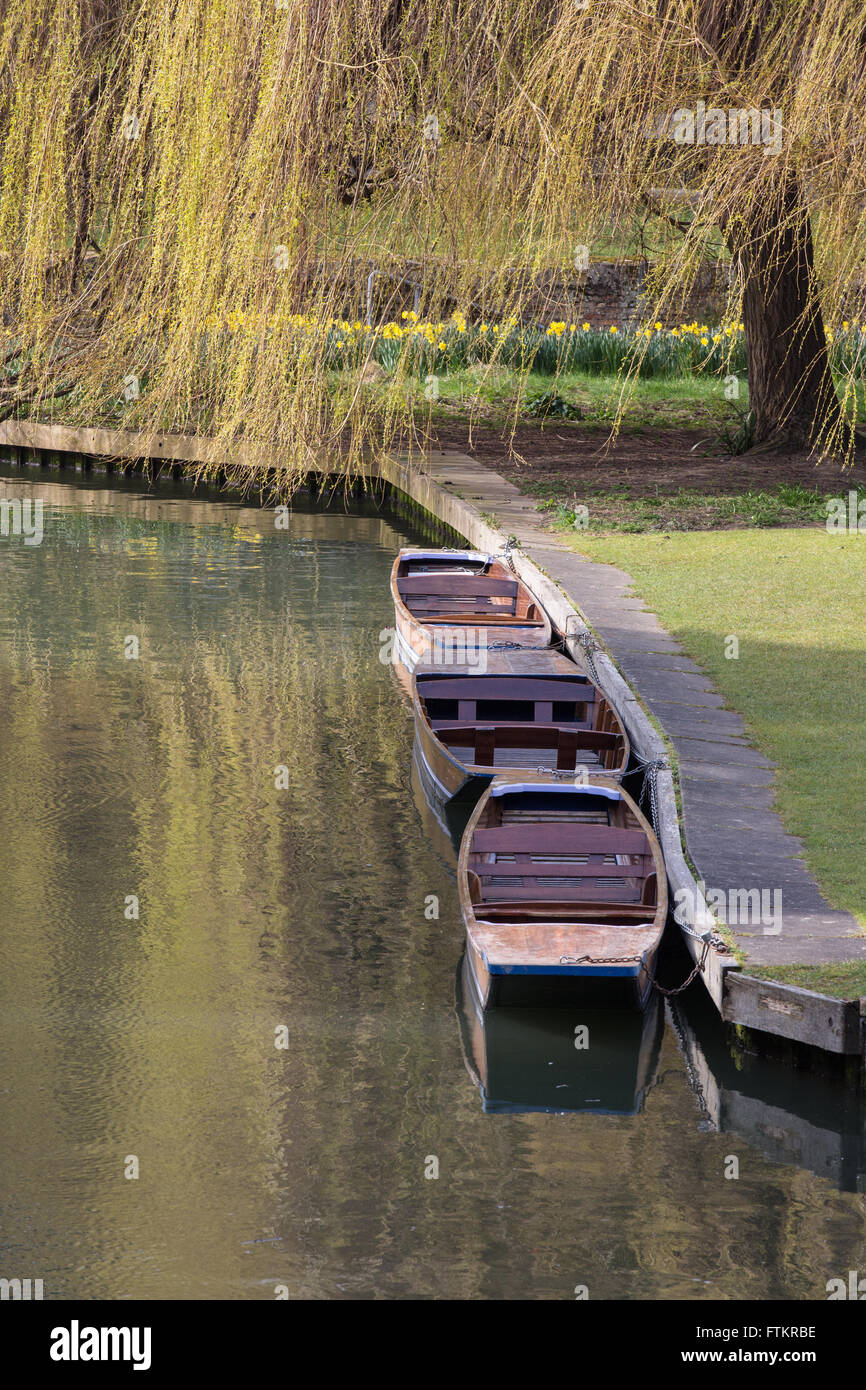 Punts moored on the River Cam at Cambridge - Stock Image