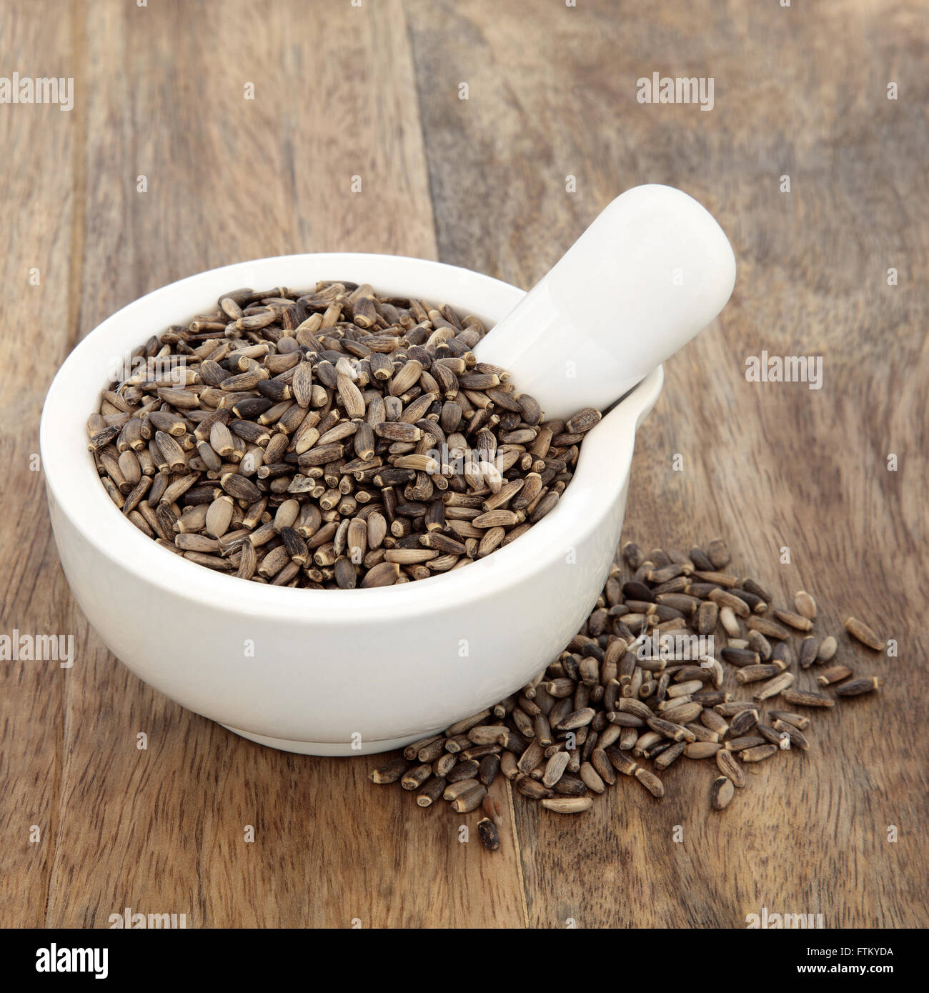Milk thistle herb used in natural alternative herbal medicine over old wood background. - Stock Image