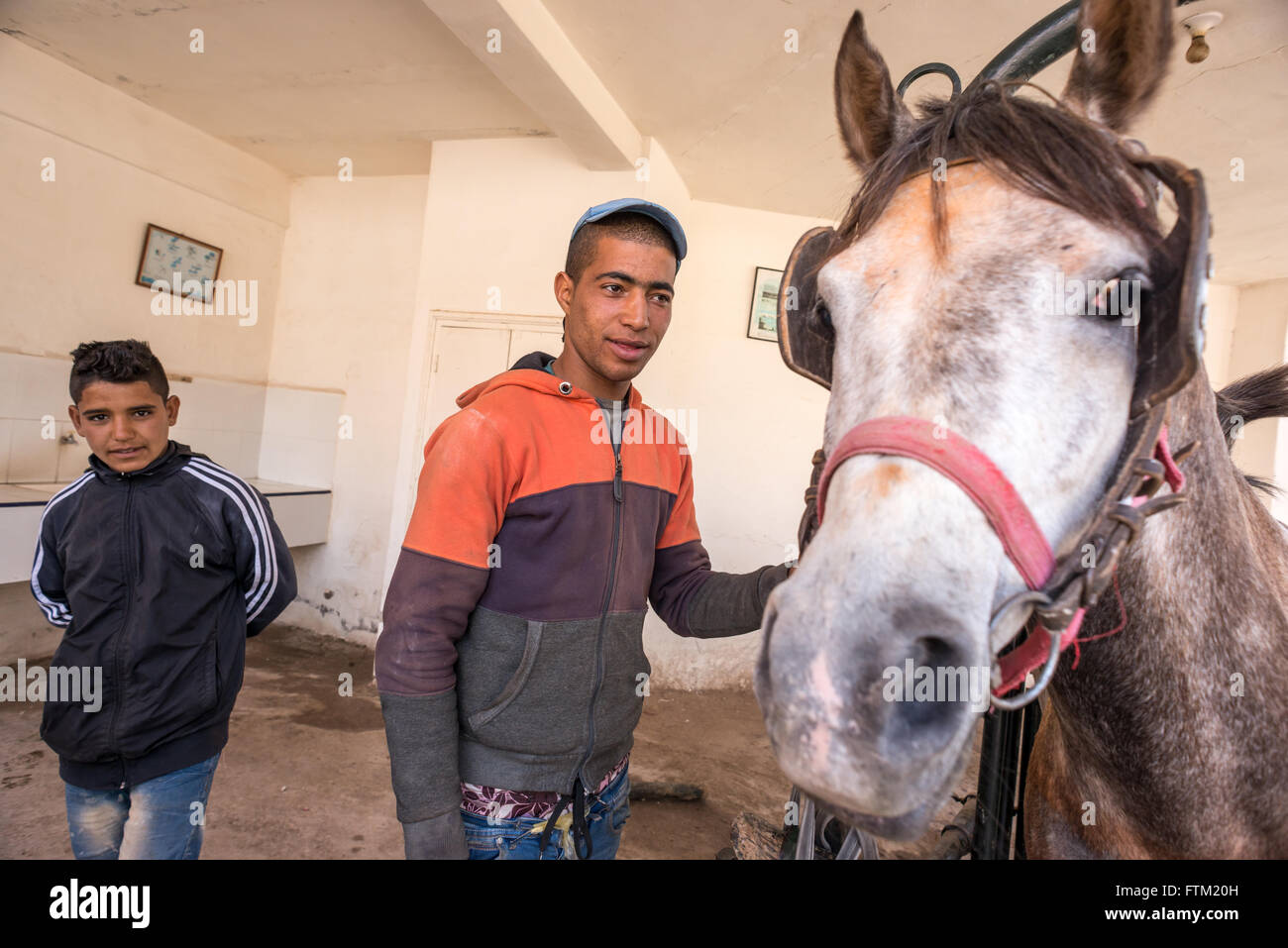 A young man with his horse at the SPANA veterinary centre in Marrakech. - Stock Image