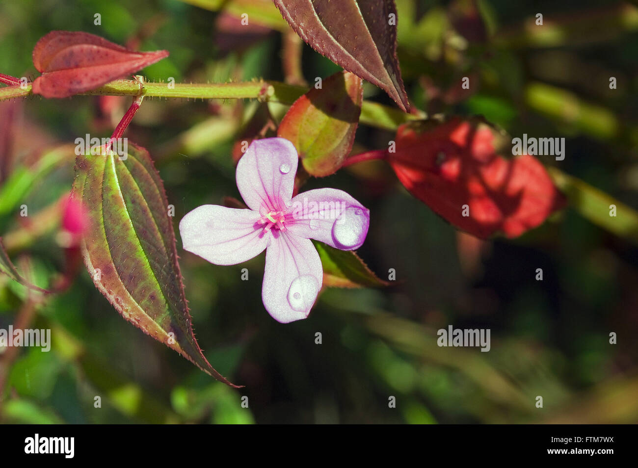 Flower with dew drops - Stock Image