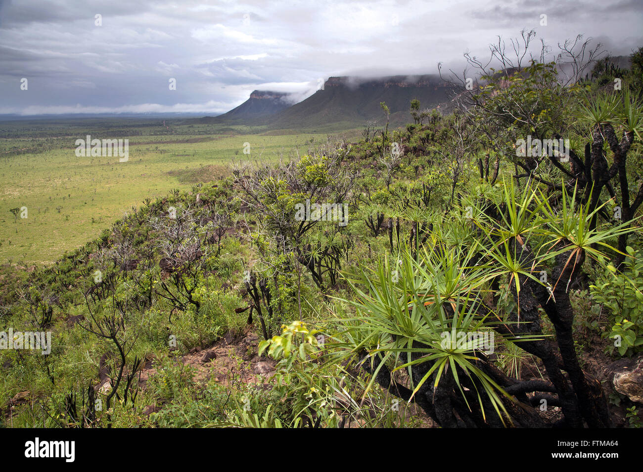 Savannah vegetation on the slopes of the Sierra of the Holy Spirit - Jalapao - Stock Image