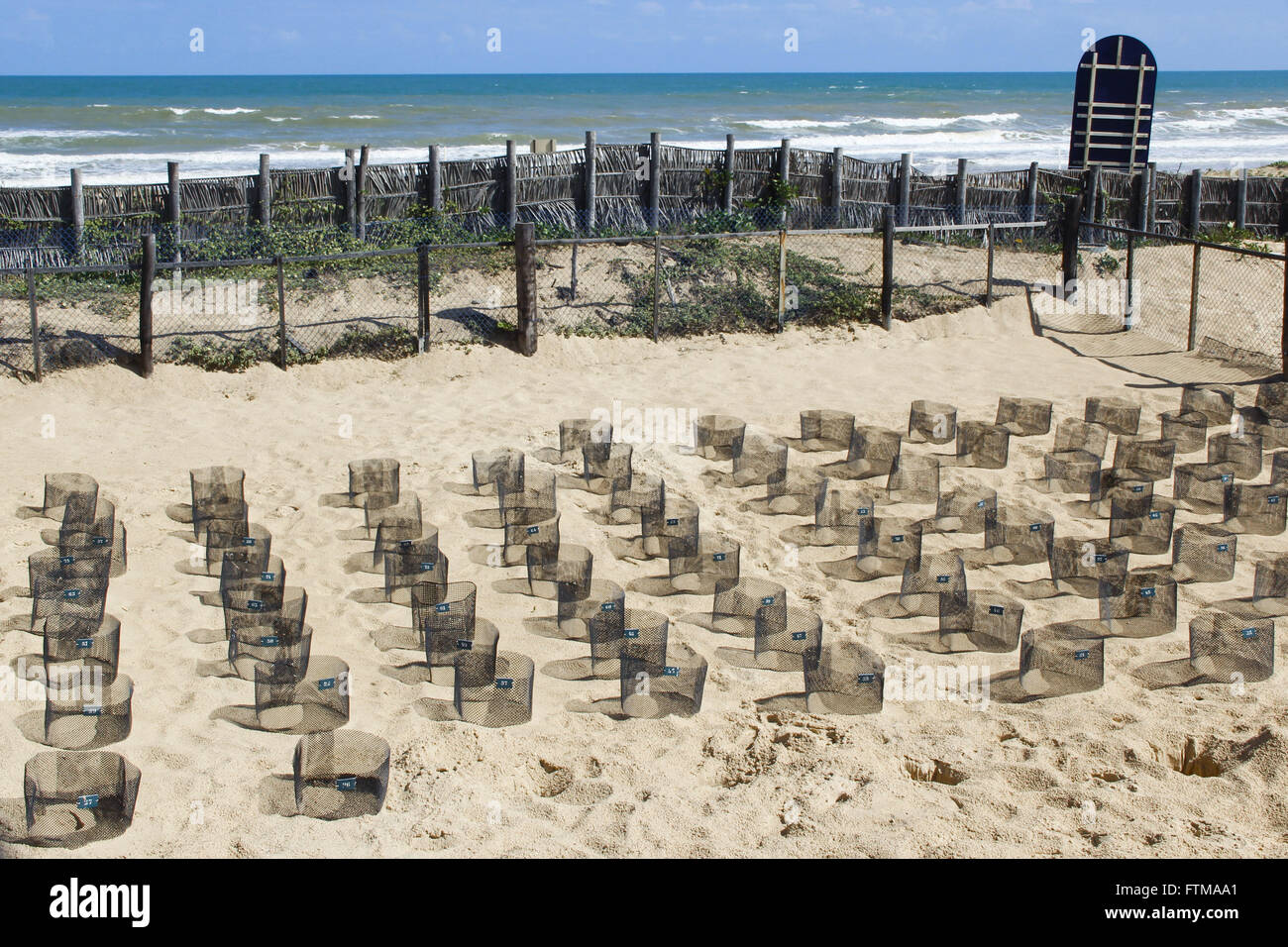 Nests and eggs of protected sea turtle - Tamar Project Stock Photo