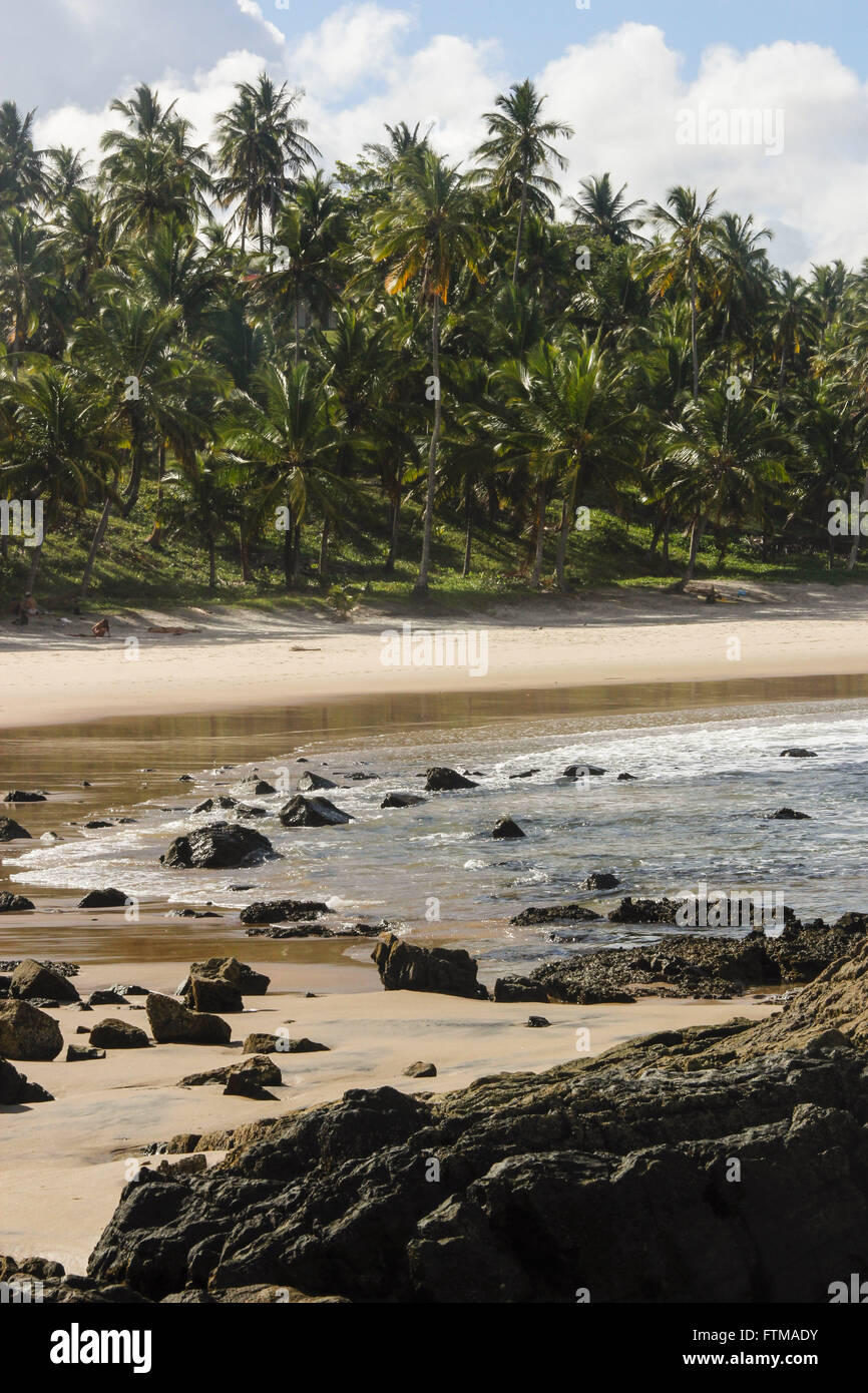 Coconut palms on the beach front of Prainha - Stock Image