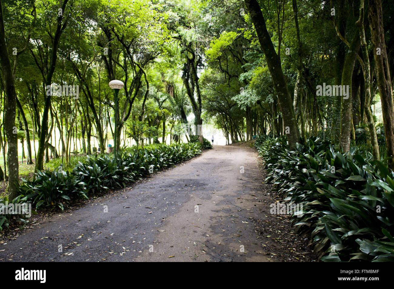Alameda Park in Sao Lourenco - Stock Image