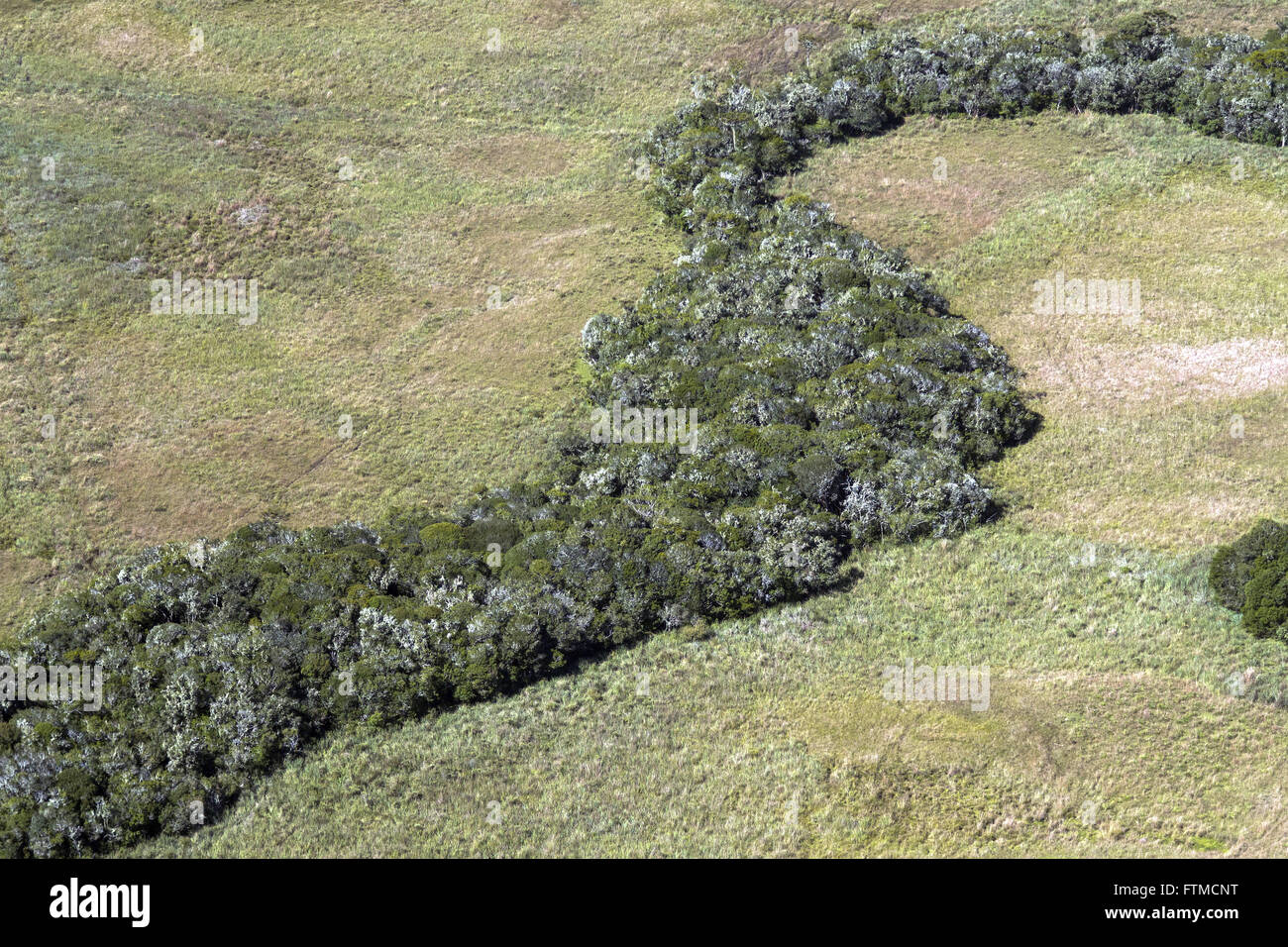 Aerial view of unspoilt countryside and capao with araucarias - Stock Image