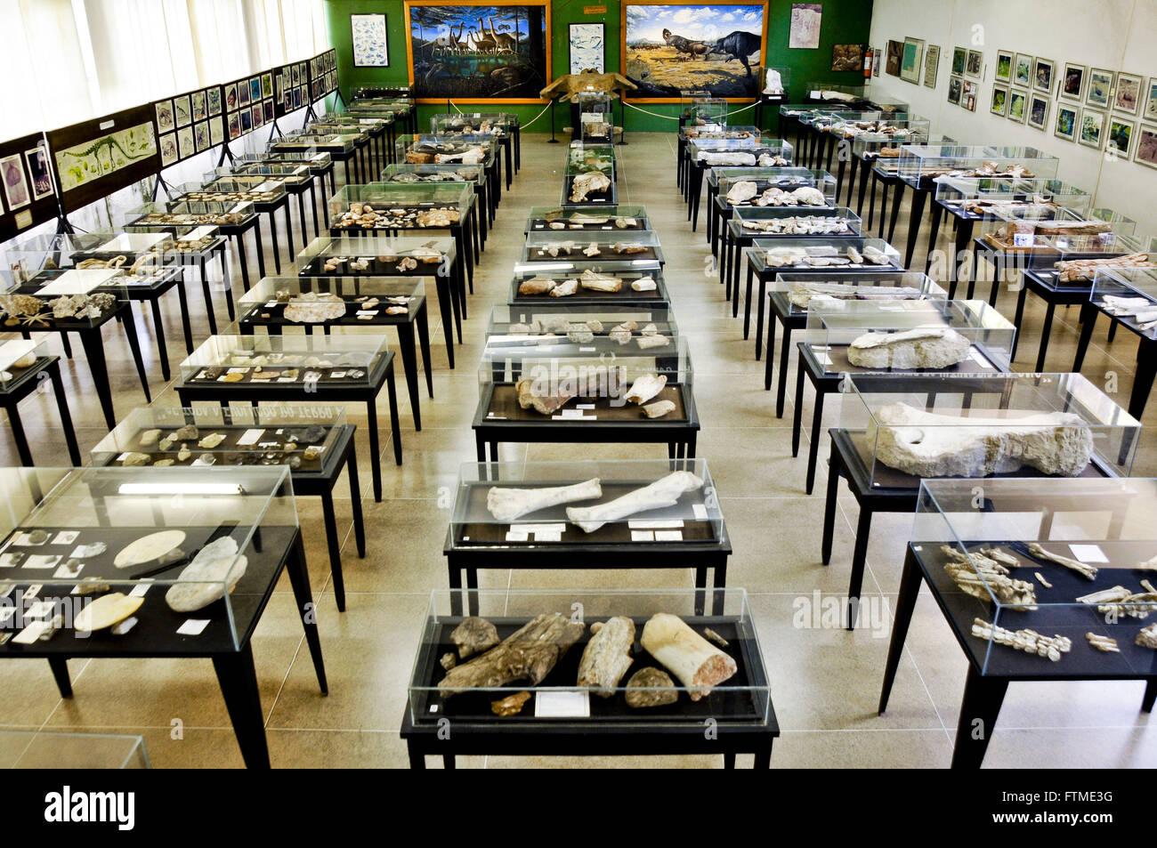 Inside the Museum of Paleontology Professor Antonio Celso de Arruda in Praca do Centenario - Stock Image