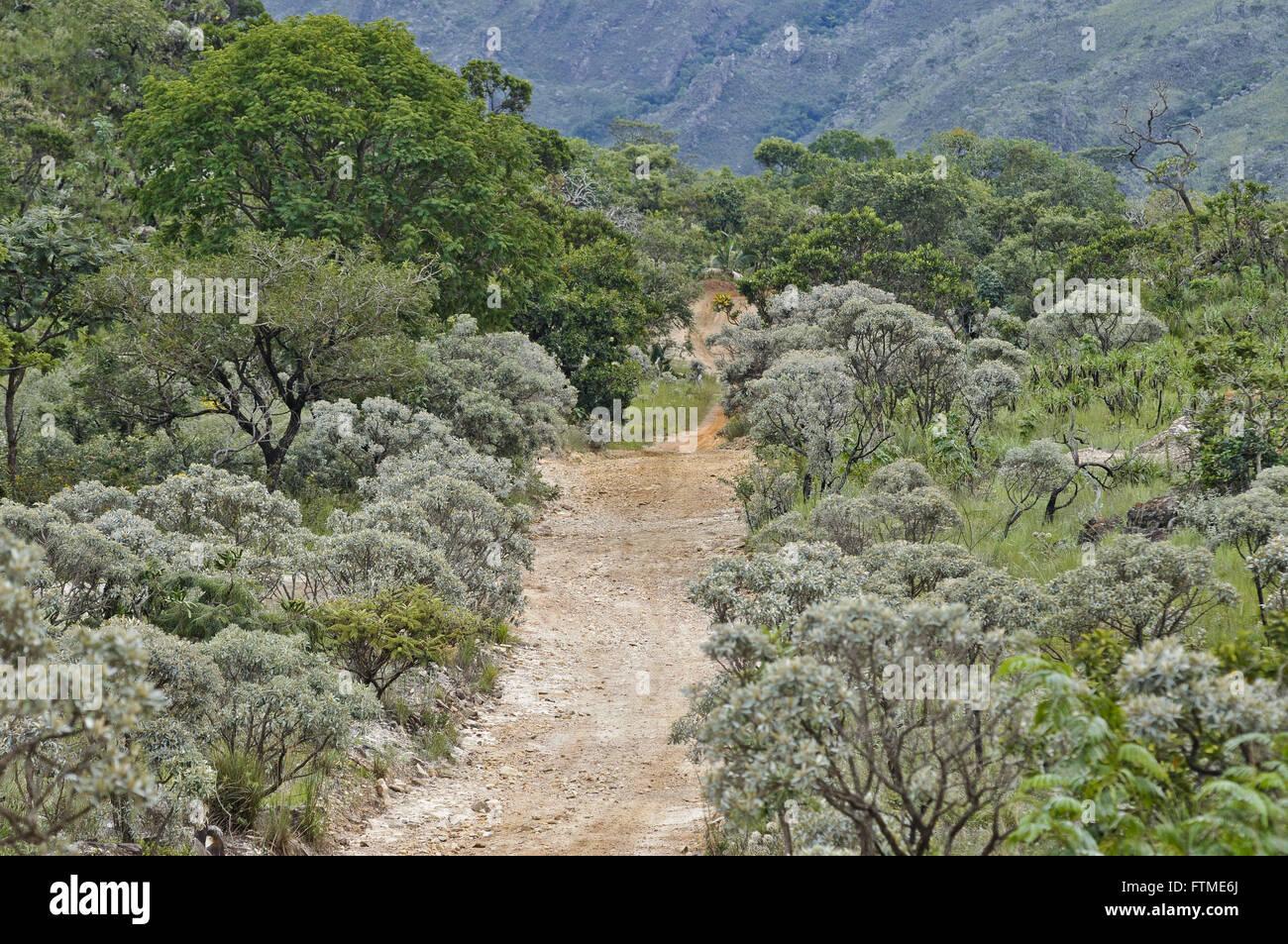 Black Mountain Road in the midst of Cerrado vegetation - Complex Serra da Canastra - Stock Image