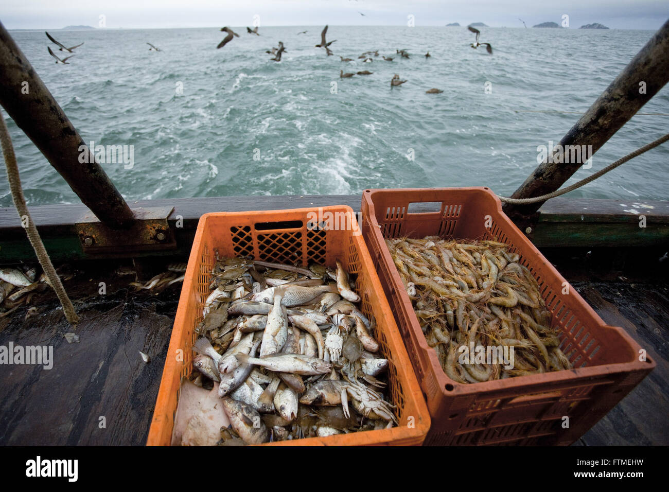 Shrimp and selected seafoods - shrimp trawling the coast of Santa Catarina - Stock Image