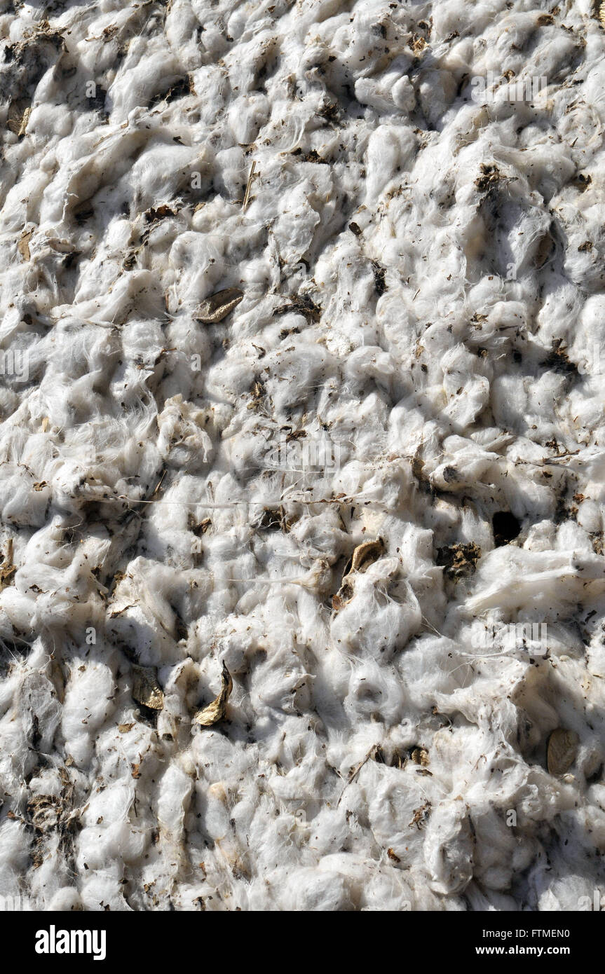 Detail of burden of pressed cotton harvester in the field by the very - Stock Image