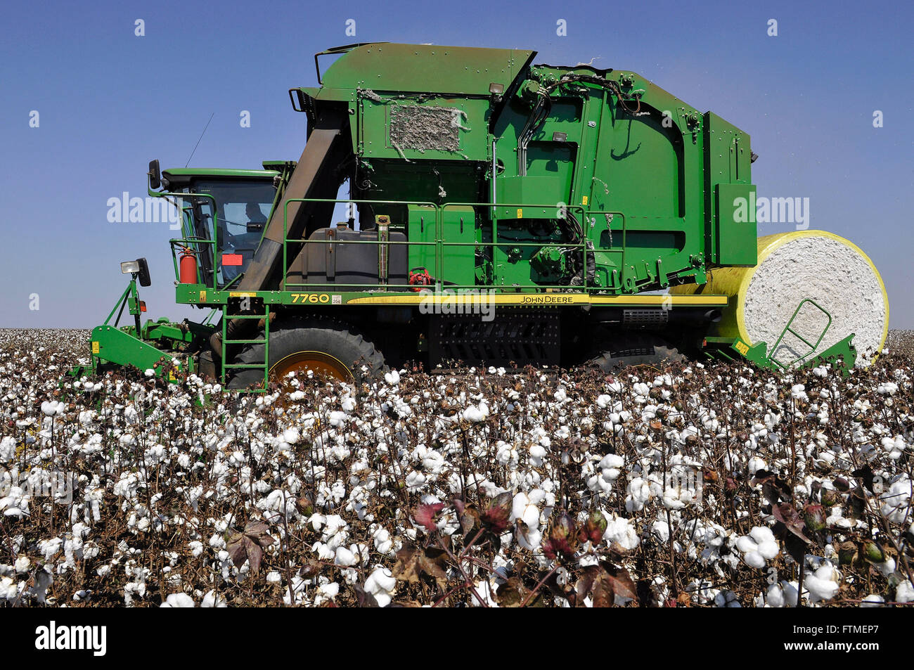 Planting of cotton and combine advanced technology - Stock Image