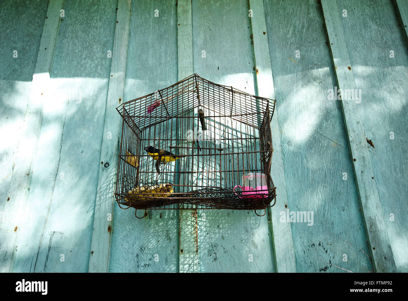 Bird cage hanging on the wall of house - Stock Image