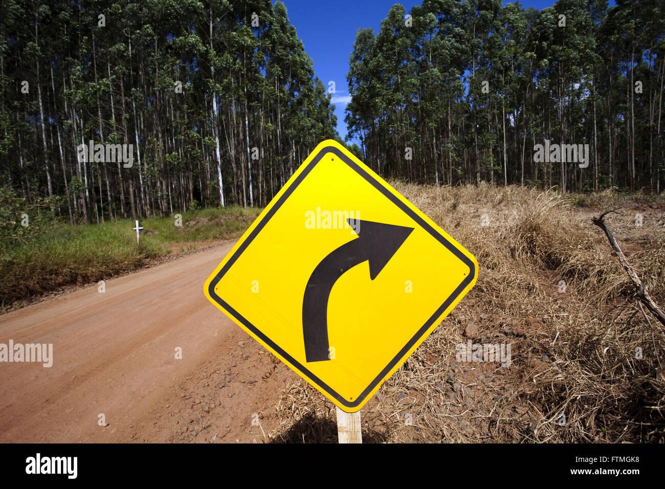 Dirt road amid eucalyptus plantation in rural Telemachus Borba - Stock Image