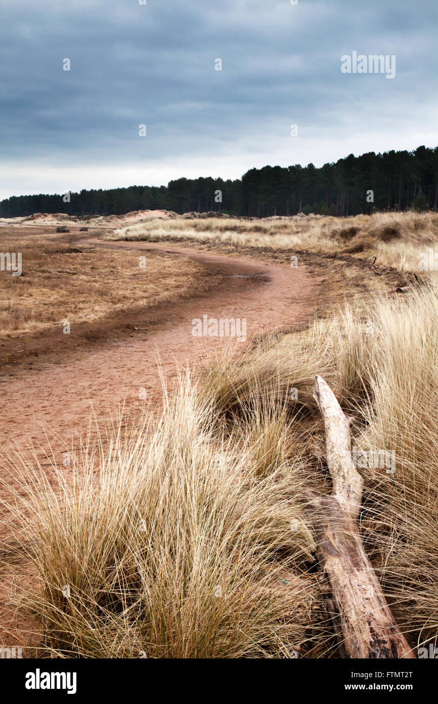 Dune Grass and Dead Tree Tentsmuir National Nature Reserve Tayport Fife Scotland - Stock Image
