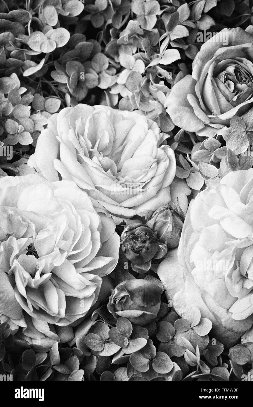 Image of vintage black white roses stock image