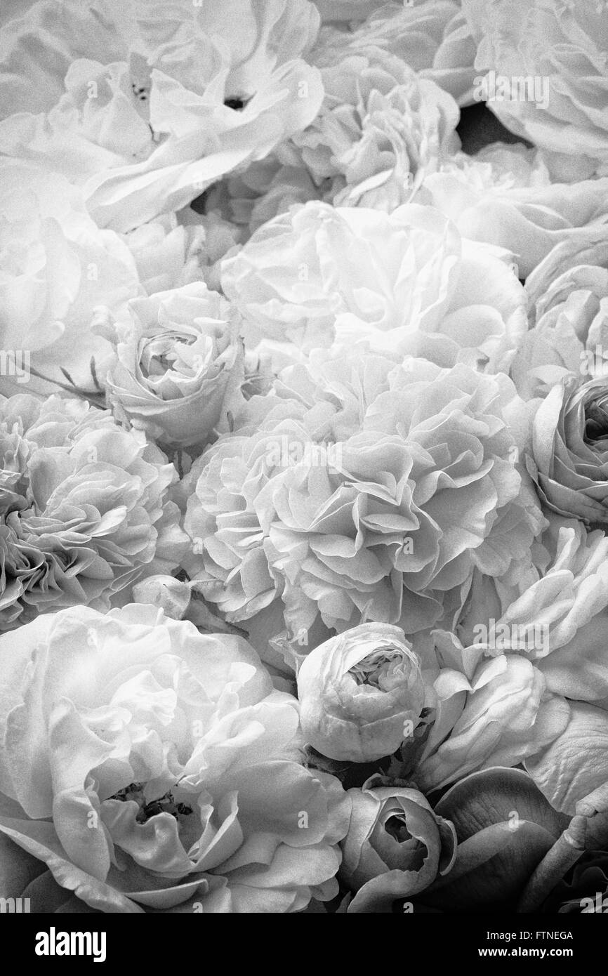 Roses Background Black And White Stock Photos Images Alamy
