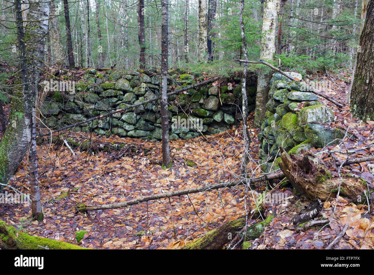 An abandoned cellar hole along an old road off Tunnel Brook Road in Benton, New Hampshire. - Stock Image