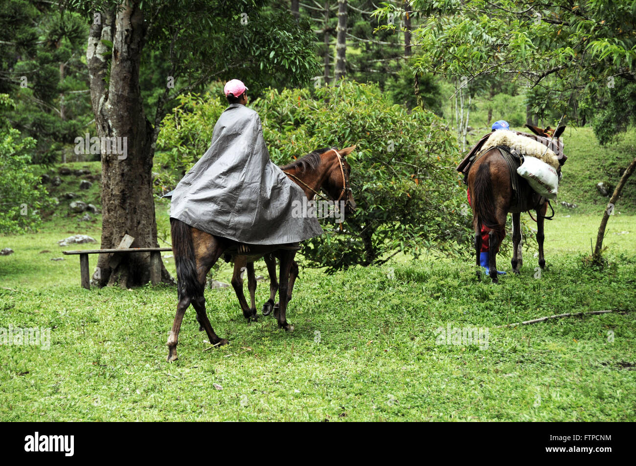 Horse charged at Quilombo Valley of Bocaina - Stock Image