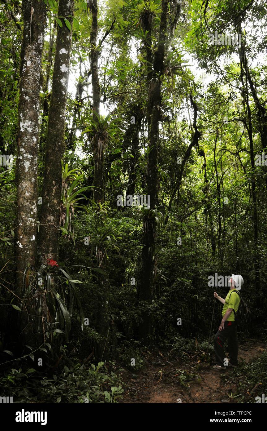 Bushland of the Bocaina National Park - Stock Image
