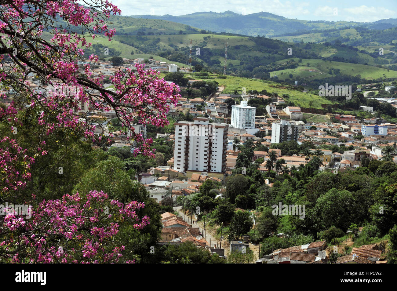 Florida Paineira in the urban area of ??the city of Socorro - Indoor SP - Stock Image