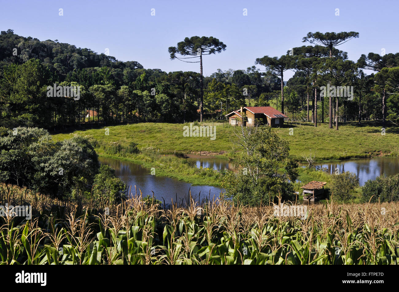 Planting corn in rural property and lakefront home in the background - Stock Image
