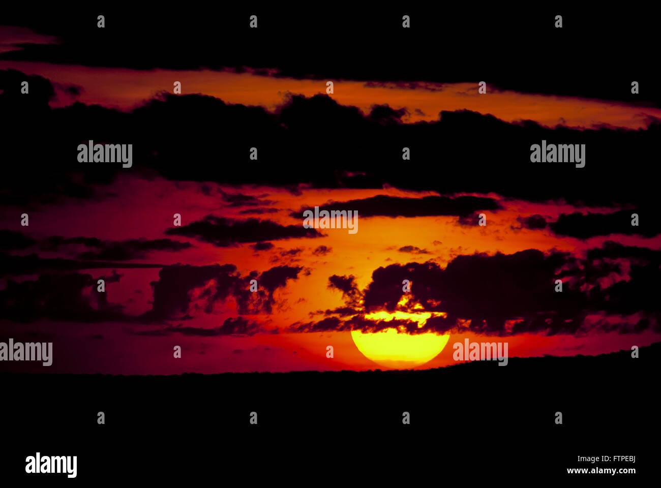 For sun-in Straws - Stock Image
