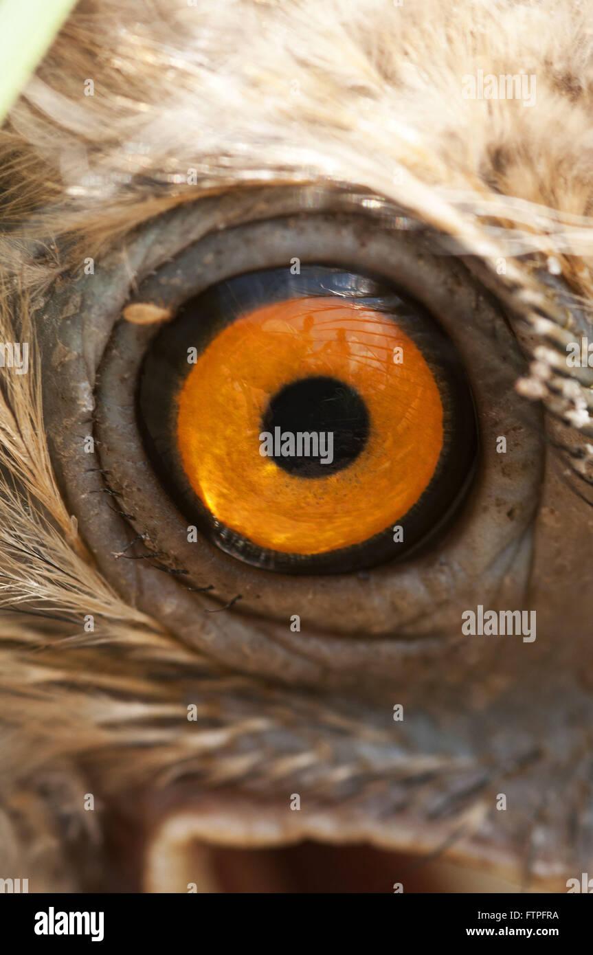 Eye Siriema - Stock Image
