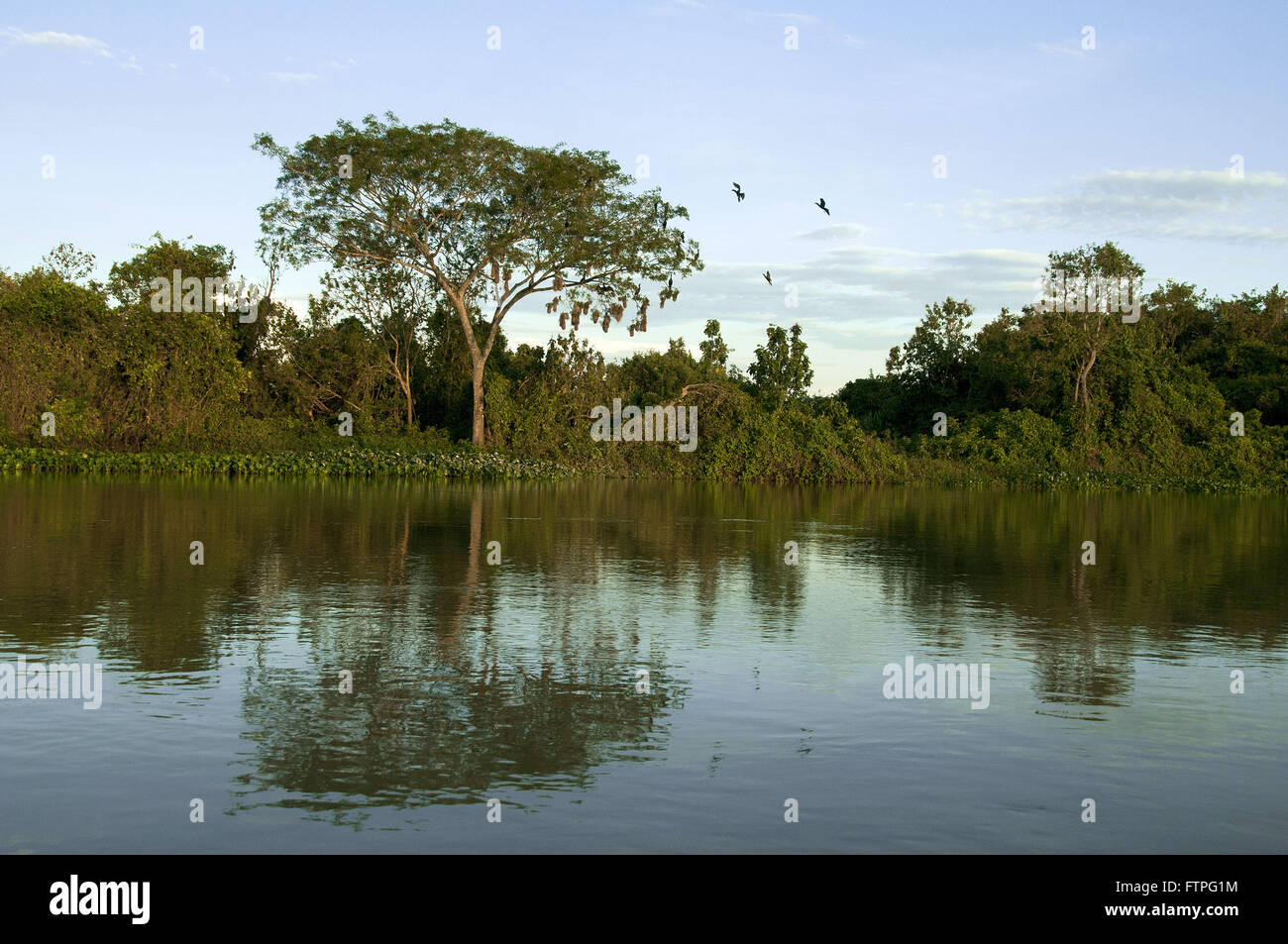 Reflection of riparian vegetation in the Rio Paraguay - Stock Image