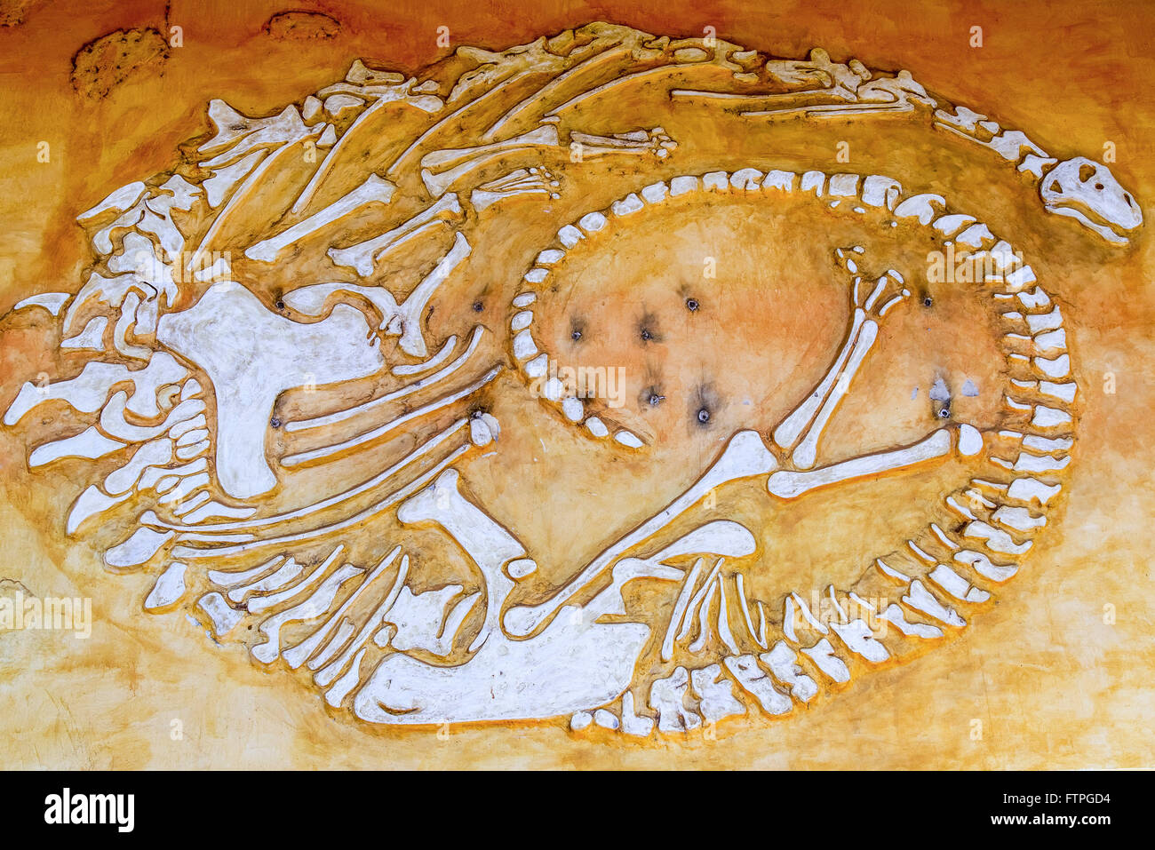 Representation of bones in Dinosaur Museum and Research Center paleontological - Stock Image