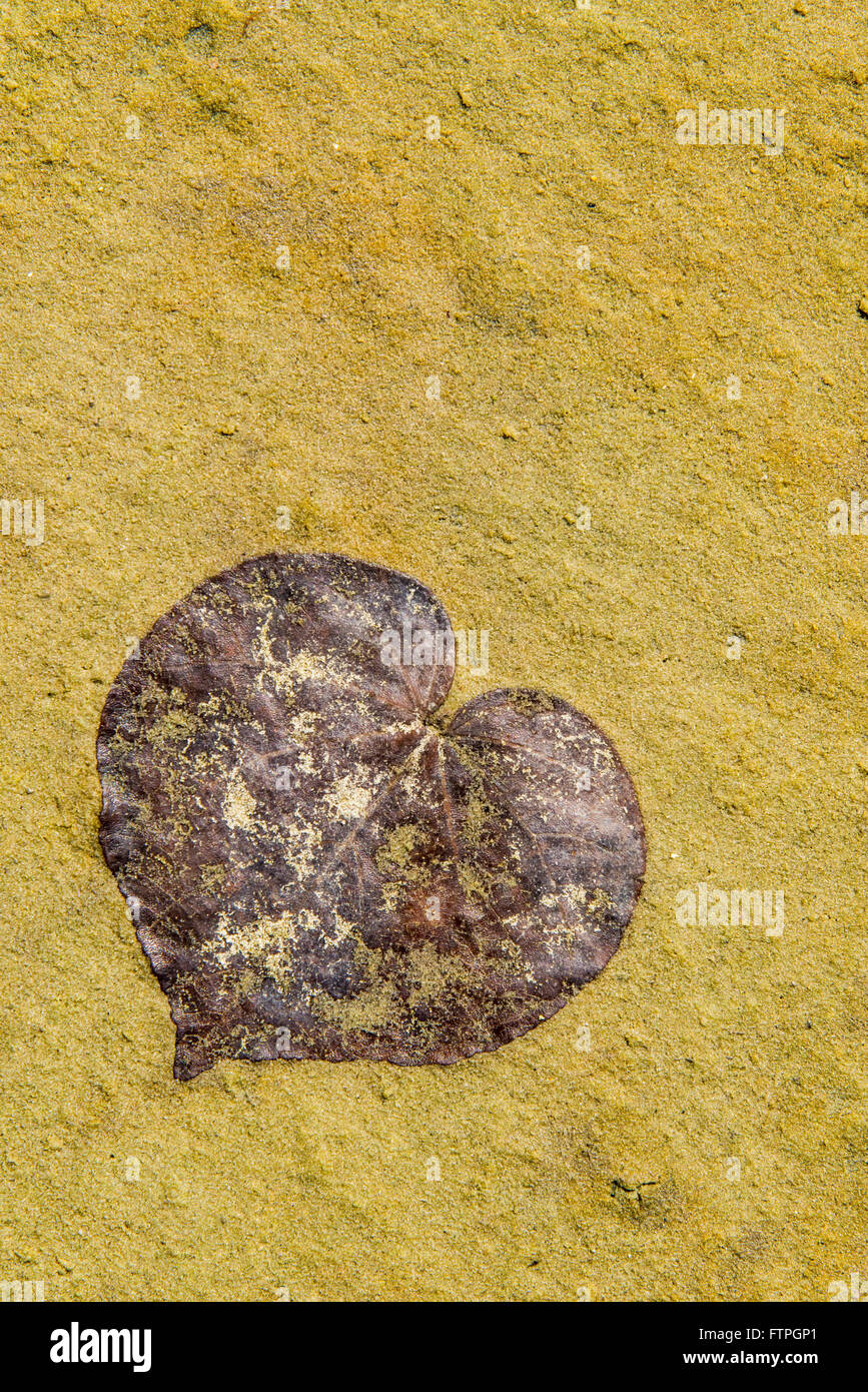 Leaf in heart shape in Balneario de Capri - Stock Image
