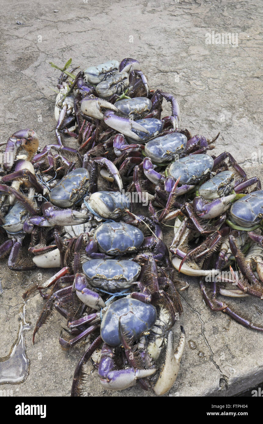 Crabs on display for sale at the Municipal Market - Stock Image