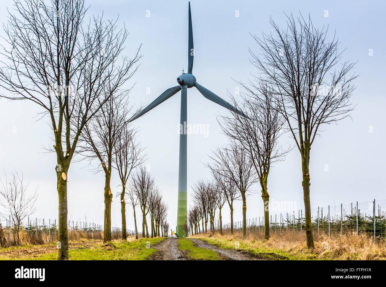 Wind energy, wind turbine in landscape, in Ense, Germany, trees, alley, - Stock Image