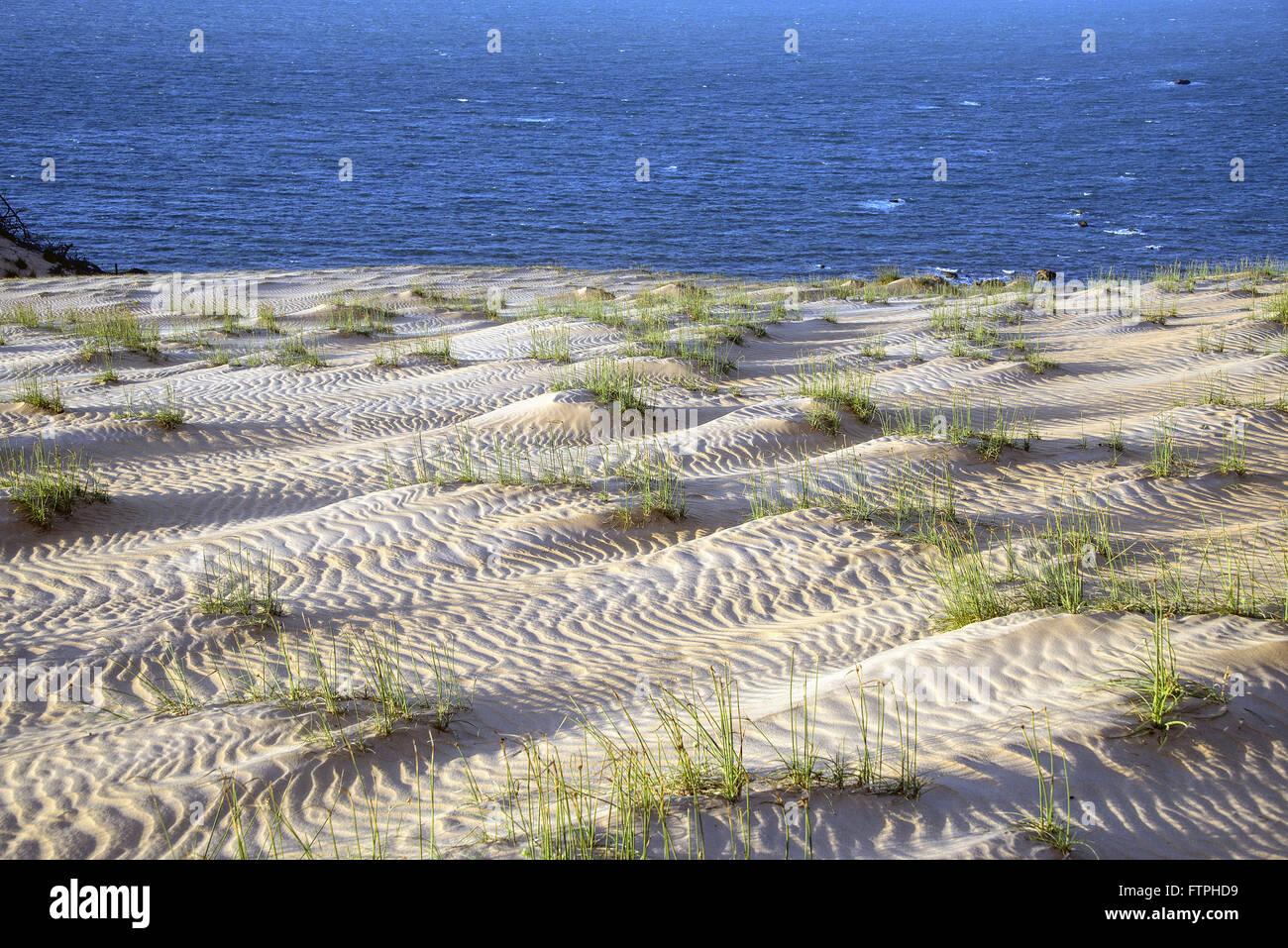 Coastal vegetation in the dunes - APA Ponta Grossa - Stock Image