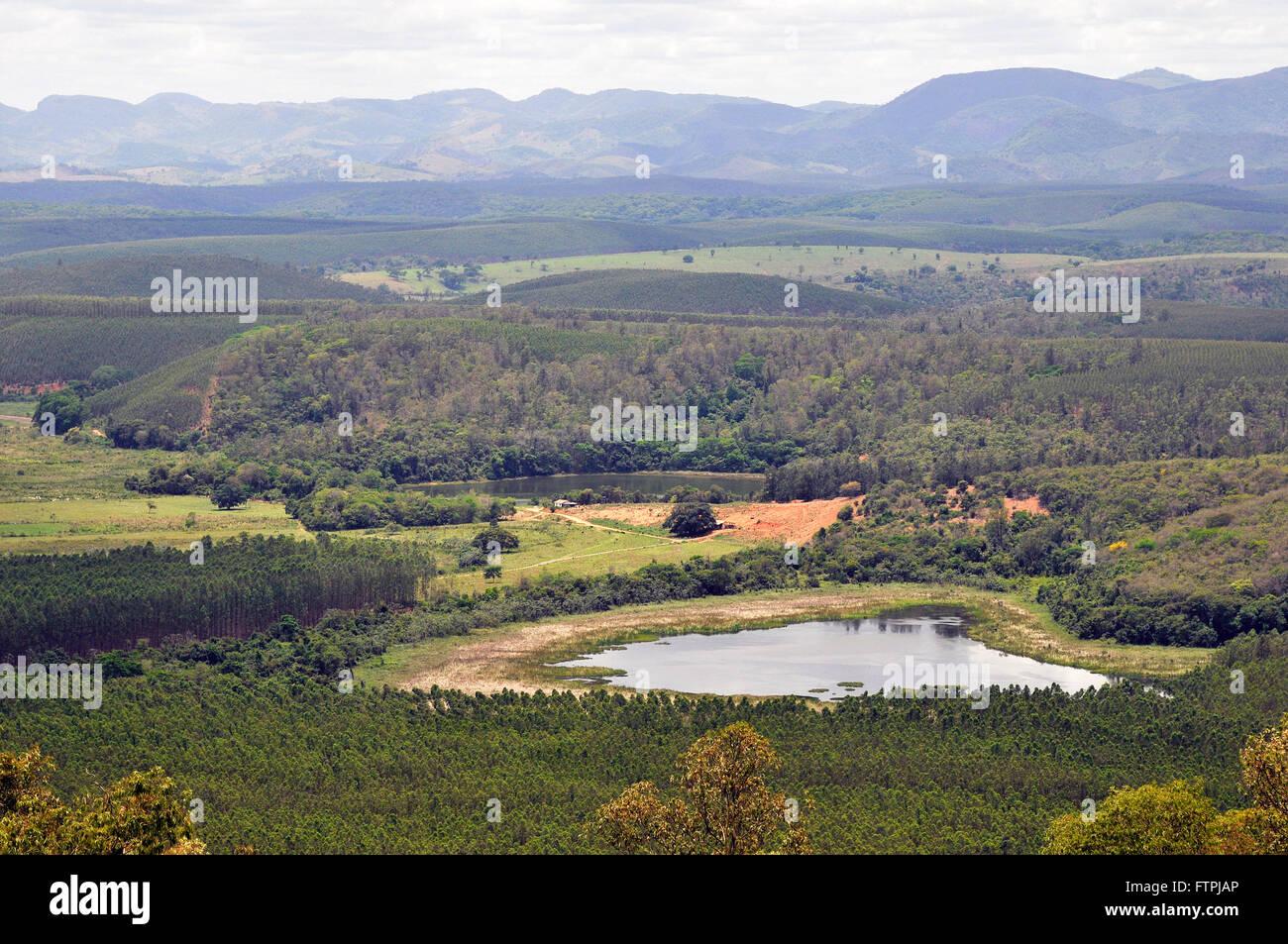 Plantation of eucalyptus trees surrounding the Rio Doce State Park - Stock Image