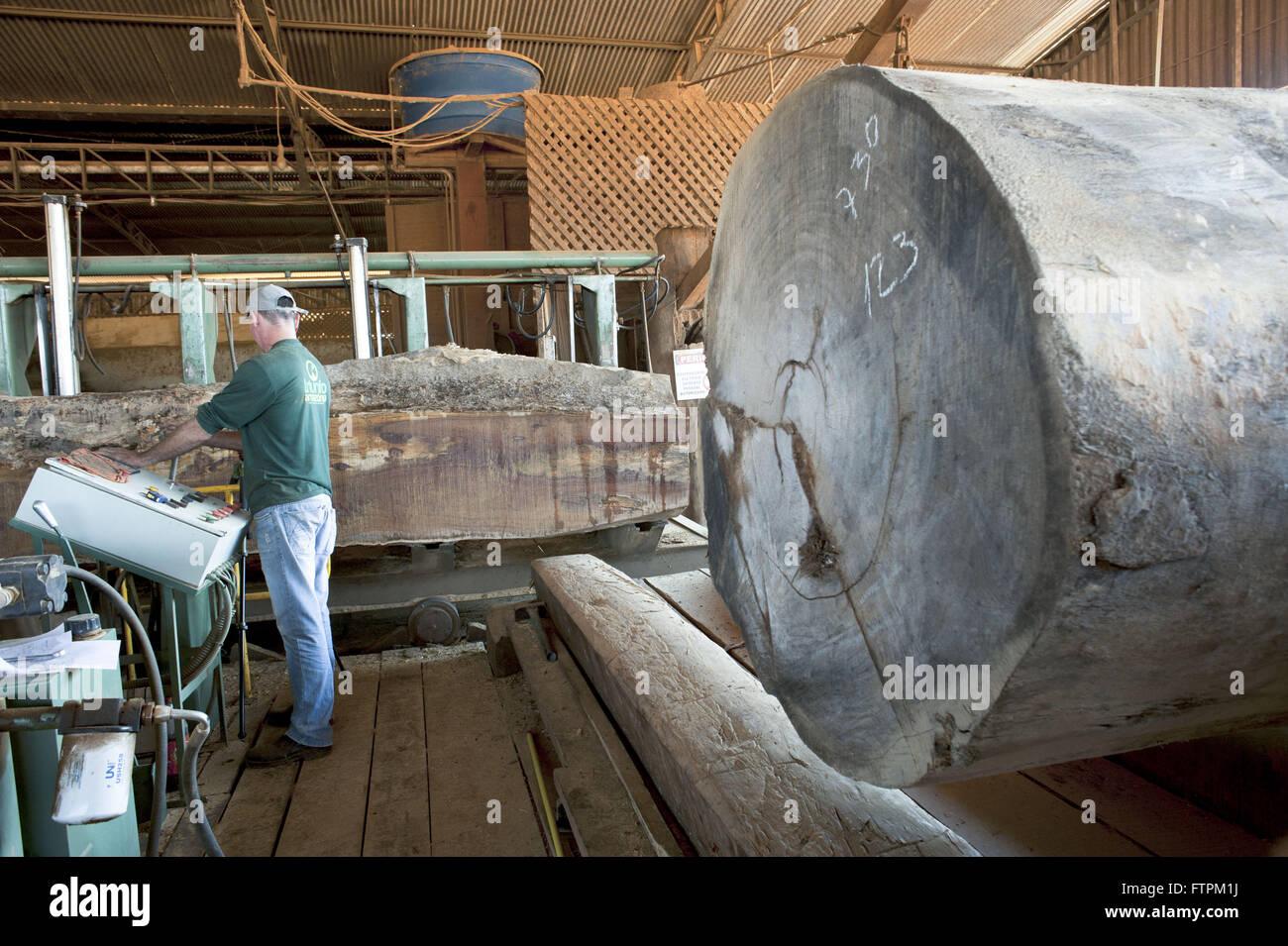 Cumaru Tree Logs Iron To Cut Sawmill Certified Wood Stock Photo