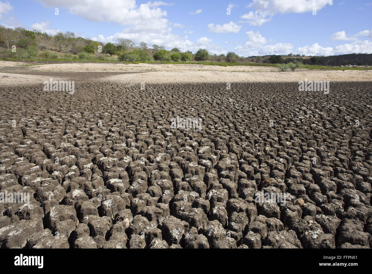 Details riverbed cow head - dry due to drought - Stock Image