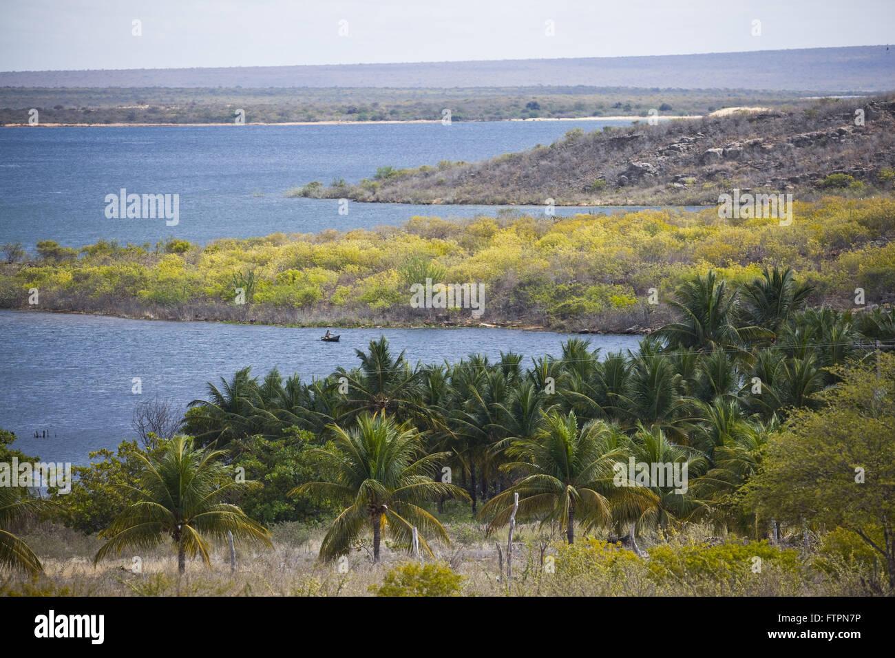 Coconut Tree Plantation Stock Photos Amp Coconut Tree