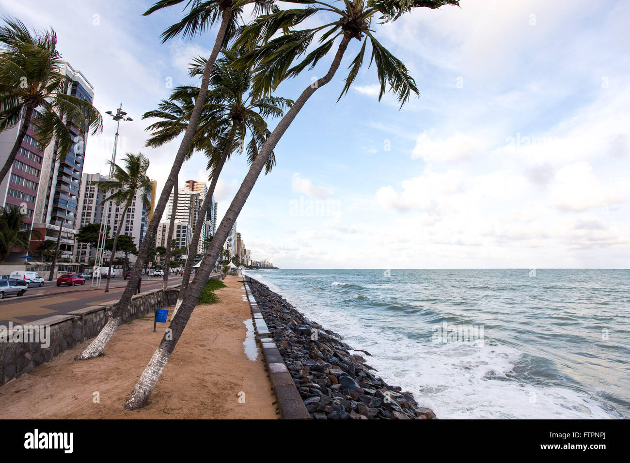 Palm tilted by the action of the wind on the edge of Praia de Boa Viagem - Stock Image